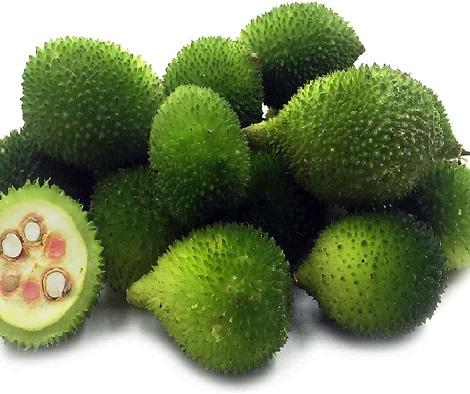 Kantola Melon
