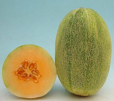 New Century Melon