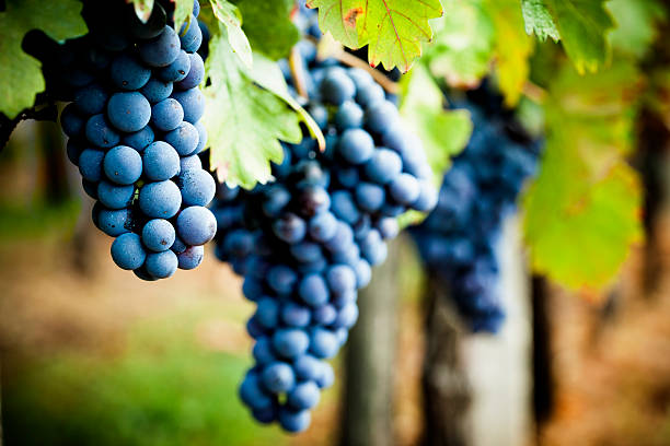 Grape health benefits - cardiovascular protection