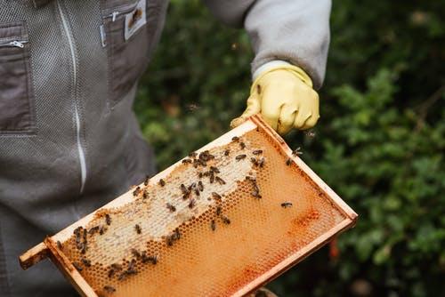 Honey Colony Collapse